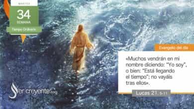 """Photo of Evangelio del día 24 noviembre 2020 (""""Muchos dirán: 'Yo soy'. No vayáis tras ellos"""")"""