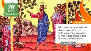 """Photo of Evangelio del día 24 octubre 2020 (""""Uno tenía una higuera plantada en su viña"""")"""