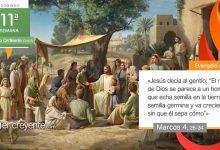 """Photo of Evangelio del día 13 junio 2021 (""""La semilla germina y va creciendo"""")"""
